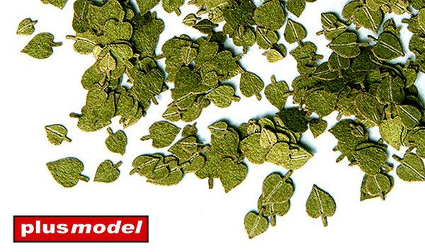 Zelené listí - lípa