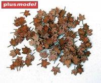 Leaves - maple